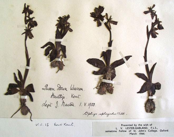 senų augalų kolekcija