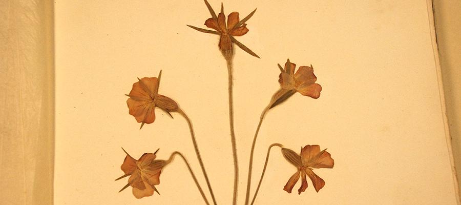 Augalų kolekcijos – svarbios klimato kaitos studijoms