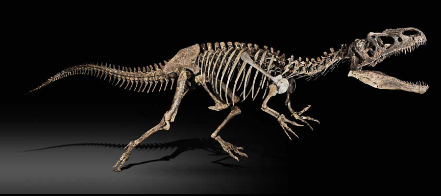 Dinozaurų kolekcionavimas – brangus pomėgis